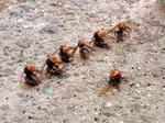 キイロスズメバチ見かけませんか?